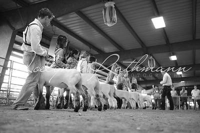 Market Lamb Ringshots