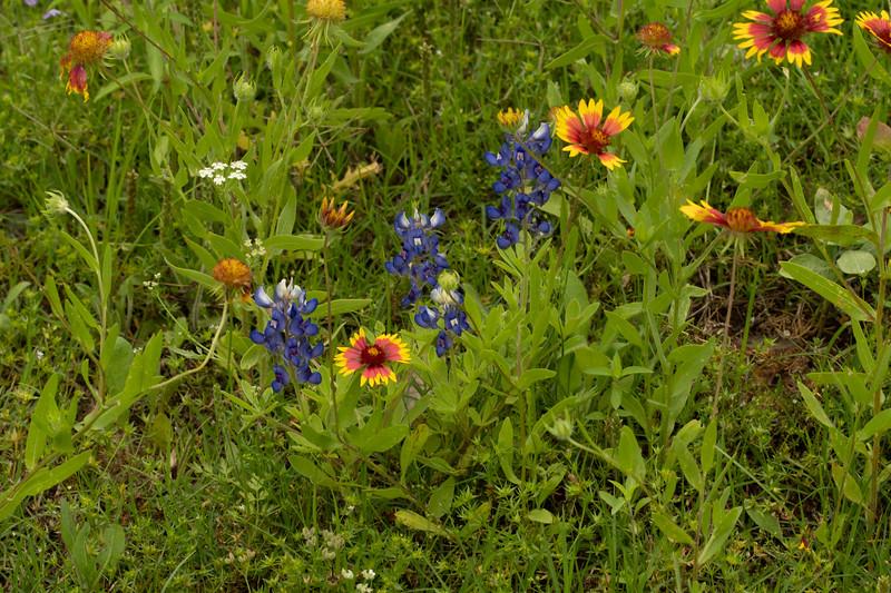 Prairie View 1 May 2020-04895.jpg
