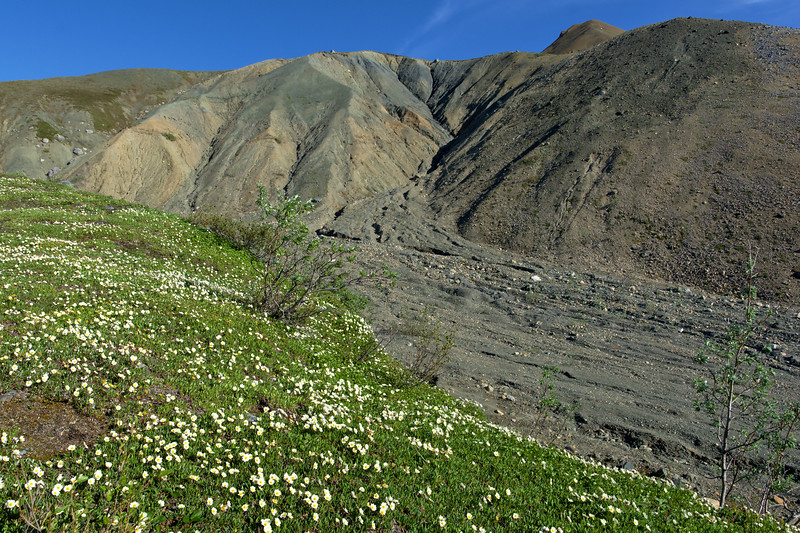 Alpine Flowers and Harsh Landscapes