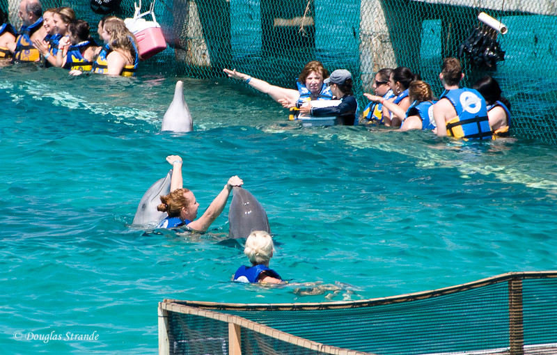 Dolphin encounter: Jessica