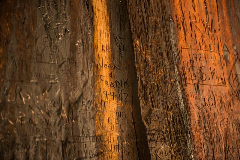 2019 San Francisco Yosemite Vacation 054 - Mariposa Grove.jpg