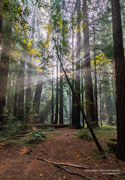 Muir Woods-7133.jpg