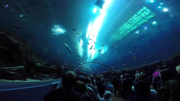 Georgia Aquarium Videos