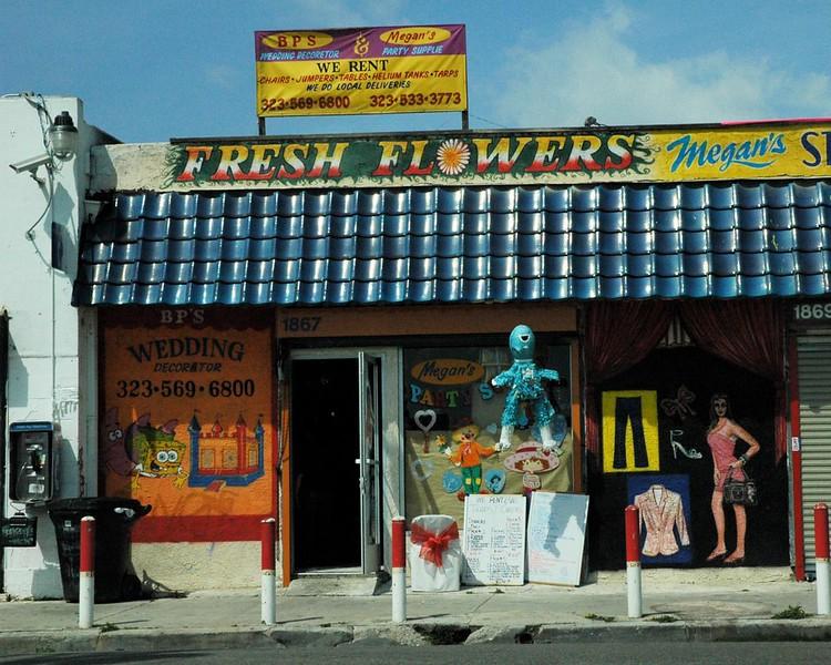 2005-Watts-WilmingtonSt_xerothecat_.jpg