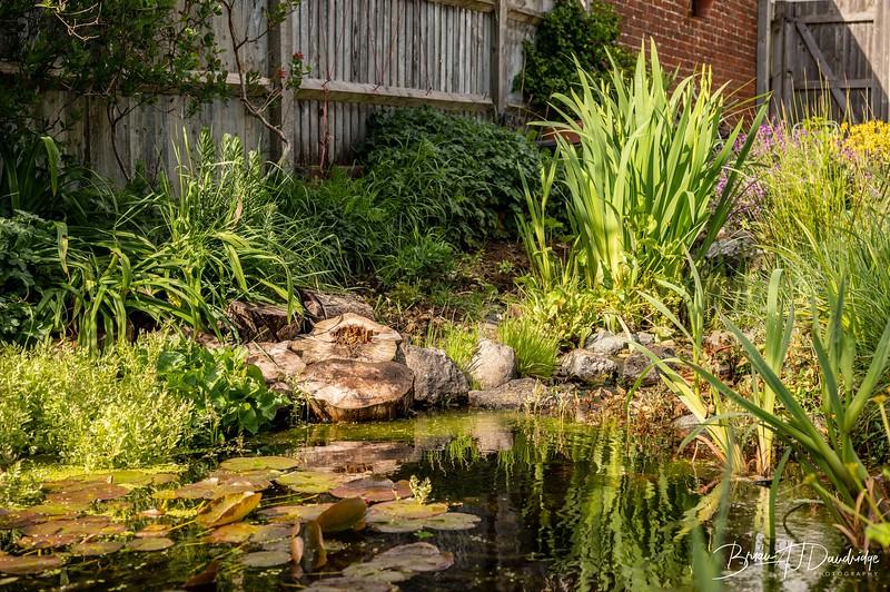 Garden at home-3005.jpg