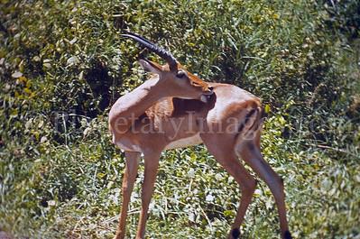 1970/71 East Africa