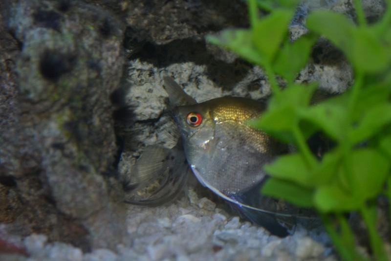 fish (3).jpg
