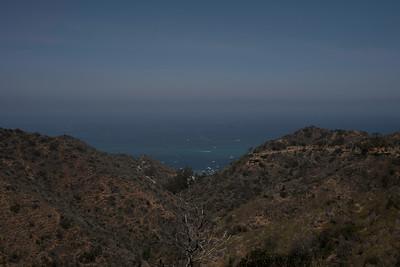 Catalina Island Buffalo & Two Harbors