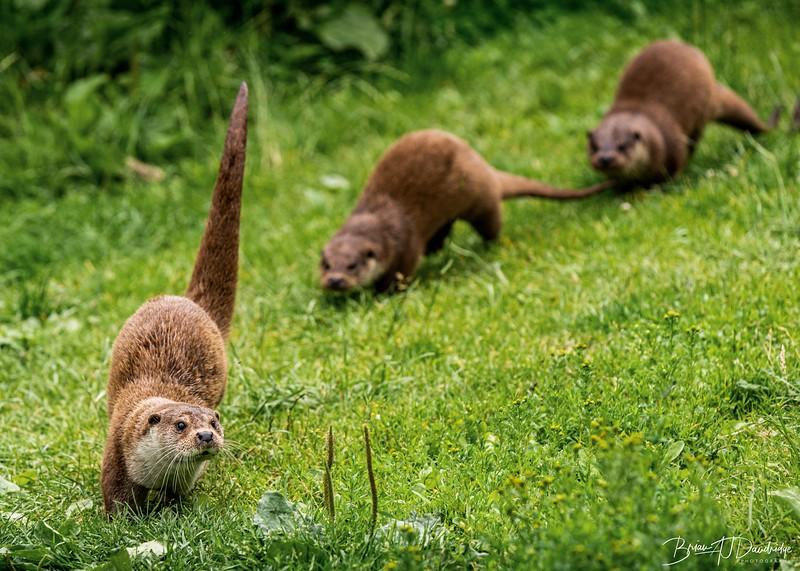British Wildlife Centre_D850-0113-Edit.jpg
