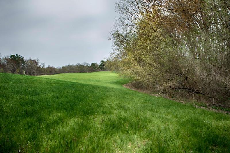 Meadow S44A3382.jpg
