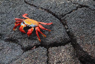 Reptiles, Crustaceans, Insects & Arachnids