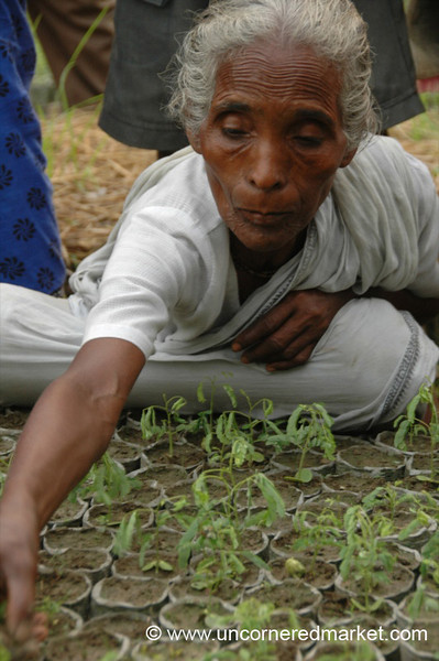 Elderly Indian Woman, Microfinance - West Bengal, India