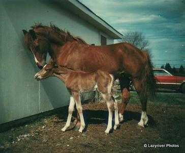 Lazyriver Horses