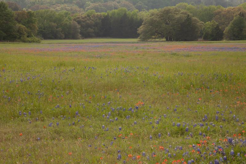 2015_4_3 Texas Wildflowers-8075.jpg