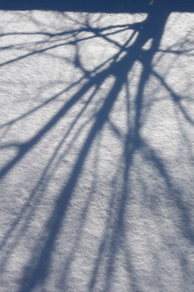 2/2/07 – Shadows on the freshly fallen snow. This is the same tree I shot yesterday or at least its shadow. We shoveled out this morning and then the clouds broke and we had bright blue skies and plenty of sunshine. But it was still well below freezing.