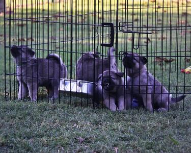 2010-10-05 Tuesday Puppy Pics