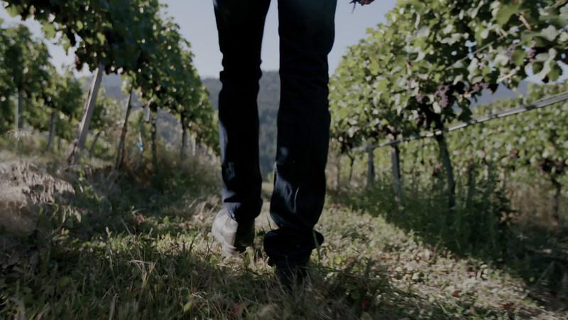 WINES OF BC BROLL9_footprint through vineyard.mov