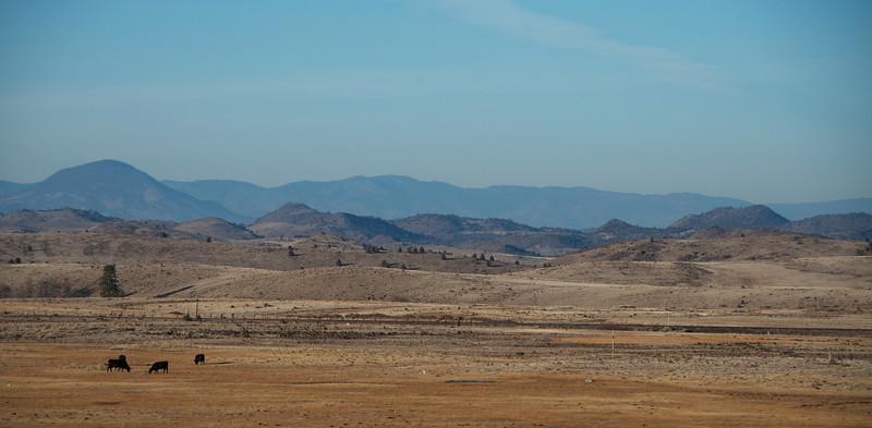 Winter scene, minus snow, in Shasta Valley