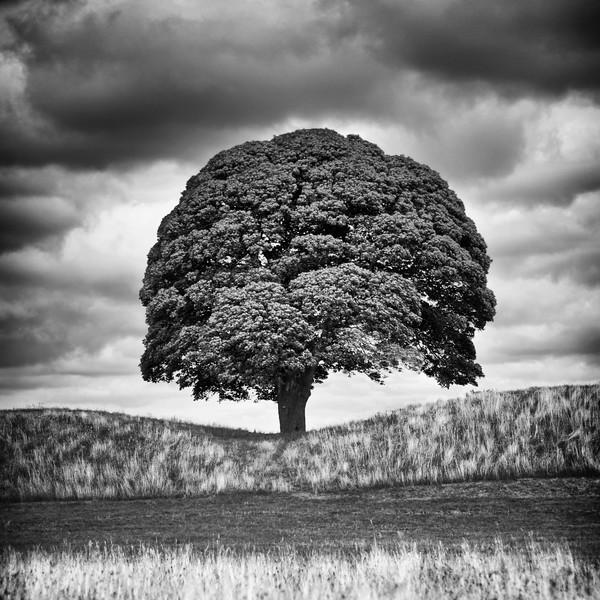 Landscape Tree Black and White.jpeg