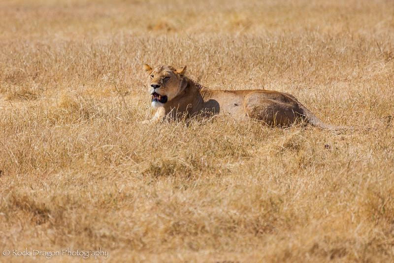 Ngorongoro-30.jpg