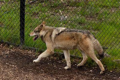 Oakland Zoo 020819