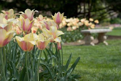 Sherwood Gardens Spring 2005