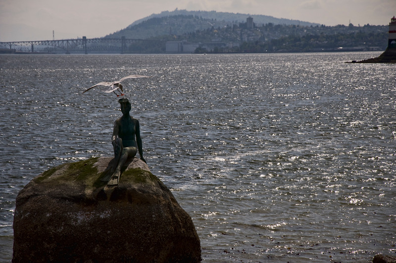 """""""Girl in Wetsuit"""" has become a landmark in Stanley Park.  A seagull thinks she would be a good landing spot."""