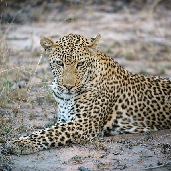 LeopardHills-20171023-1589.jpg