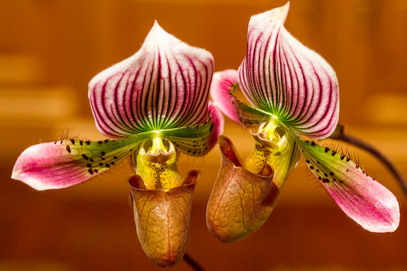 Orchids-01.jpg