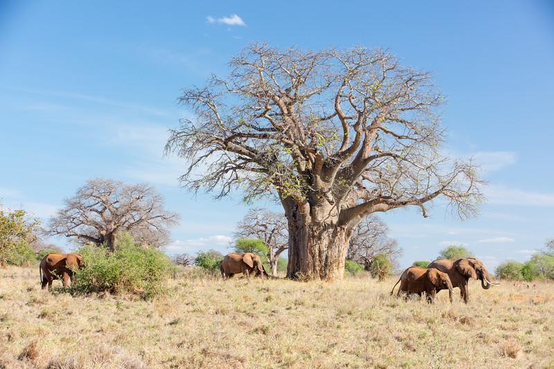 Africa - 102016 - 7896.jpg