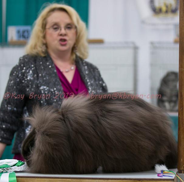 CatShow2014126.jpg
