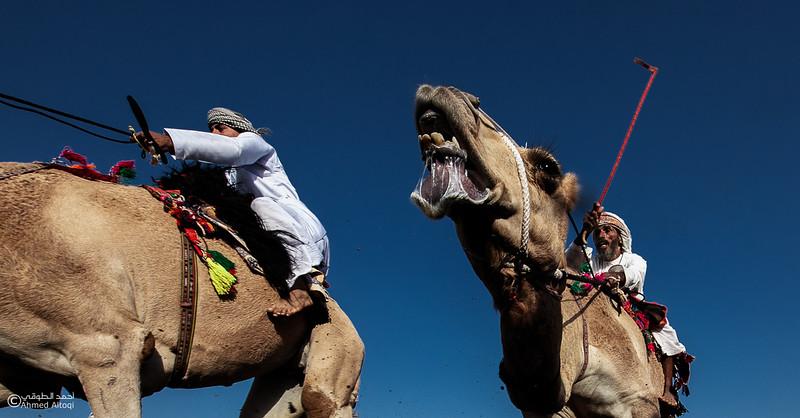 IMGL0270-1 copy- Camel Race.jpg