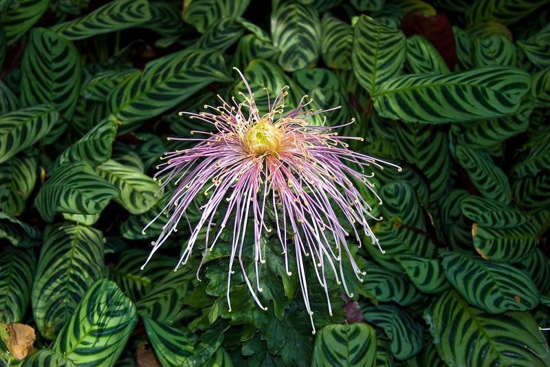 Flowerjj.jpg
