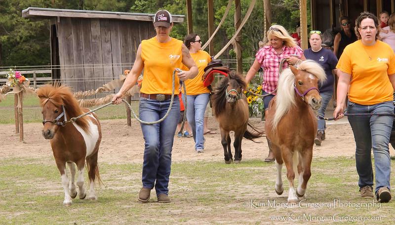 HELP A HORSE DAY   CARNIVAL L.E.A.R.N. HORSE RESCUE