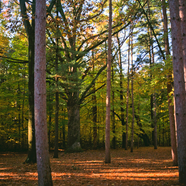 Autumn Hike 120 Film-00056.jpg