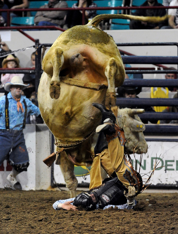 . DENVER, CO- JANUARY 27:  Patrick Geipel of Elbert, Colorado gets thrown off a bull during the Bull Riding competition of the Pro Rodeo.  The final day of the 2013 National Western Stock show was Sunday, January 27th.  One of the big events for the day was the PRCA Pro Rodeo finals in the Coliseum.  The event featured bareback riding, steer wrestling, team roping, saddle bronc riding, tie down roping, barrel racing and bull riding.  (Photo By Helen H. Richardson/ The Denver Post)