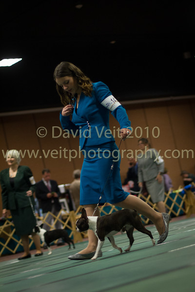 April 2018 Boston Terrier Nationals - Ringside