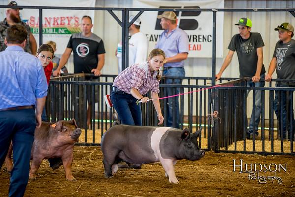 Div 04 Hog Showmanship