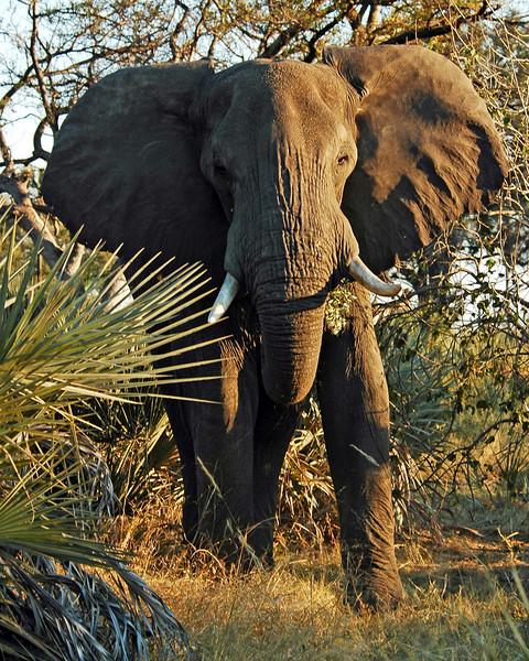 Africa 2006-30.jpg