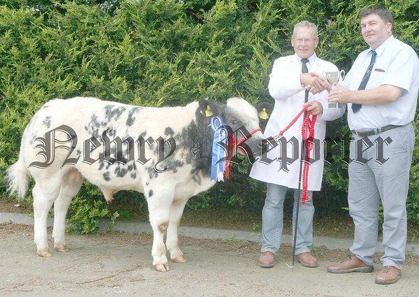 British Belgian Blue Cattle Society President Alan Cleland presents the Norbreck Genetics trophy to Jim Sloan of Kilkeel at the calf show in Moira where Jim's bull,  Ballygrange Boss, was reserve overall and male champion.