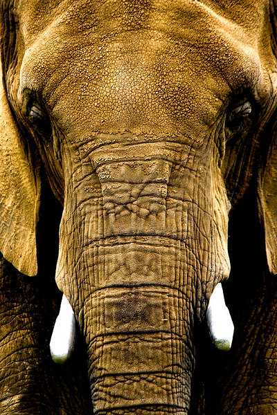 060624_9991w_Zoo_03.jpg