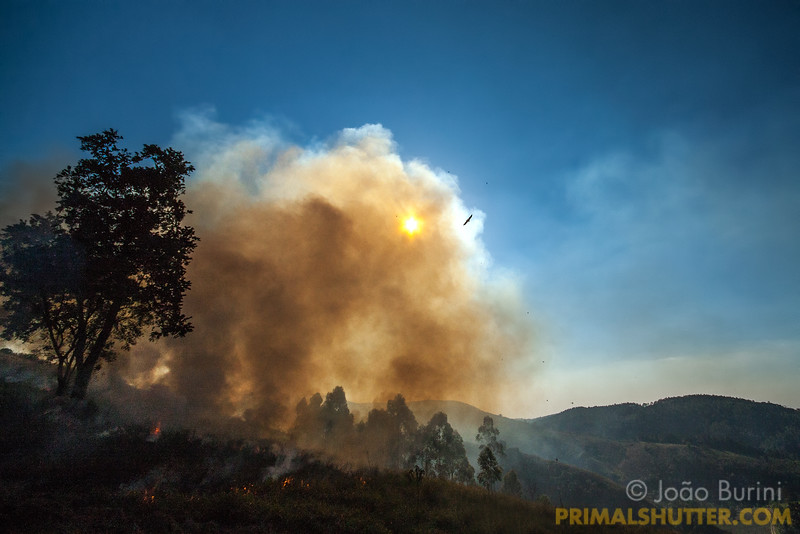 Fire clearing pastures by the rainforest