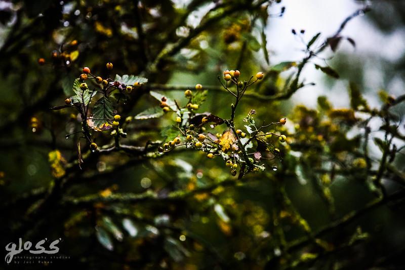 gloss photography studios ©-659.jpg