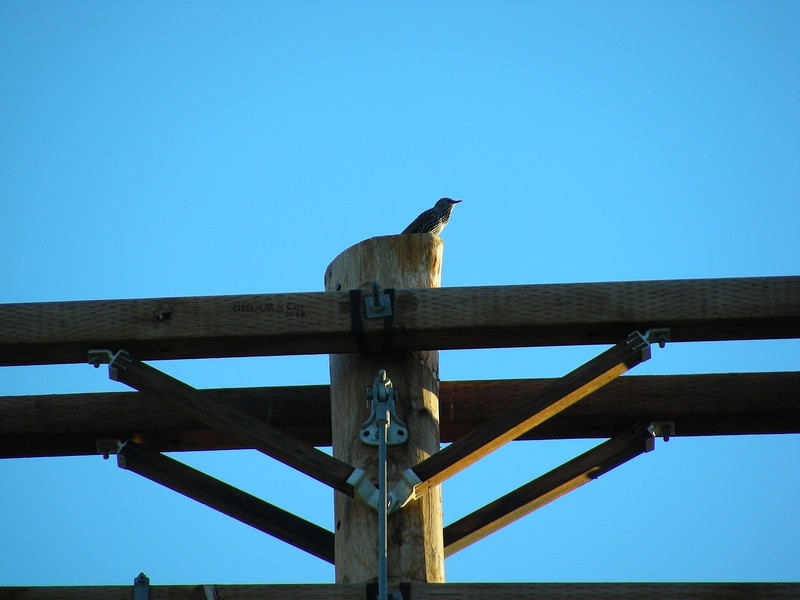 Bird warms in the late-afternoon sun