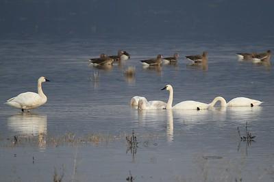 Jan 22nd Butte Valley Wildlife area