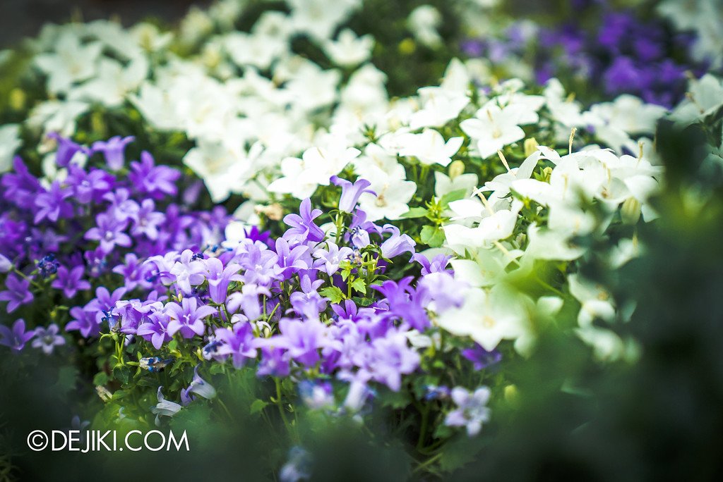 Gardens by the Bay - Tribal Tempo / blooms white and purple