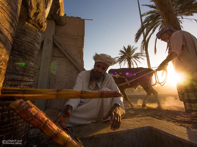 P1190366- Oman.jpg
