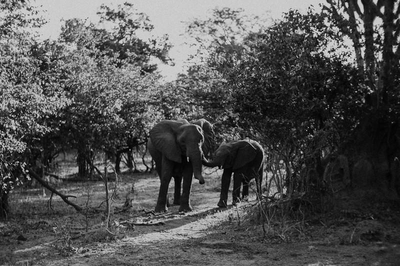 2019_06_24_Global_Malawi_ASJ_D01_Safari-34.jpg