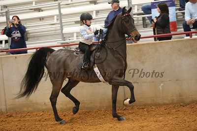 54. Academy W/T Equitation - Jr. Ex Section B