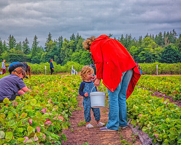 A berry picking day